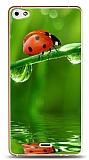 Dafoni Casper Via V10 Uğur Böceği 2 Kılıf