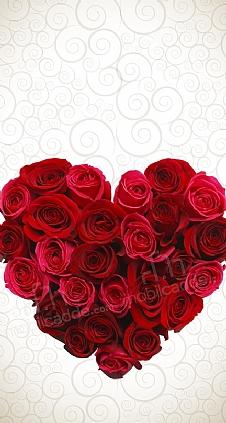 rose-love-2
