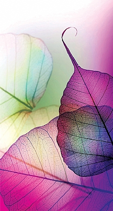 purple-leaf