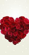 Rose Love 1