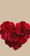 Rose Love 3
