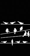 Birds Black